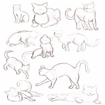 Cat Gestures Drawing Reference Guide   Drawing References and Resources  