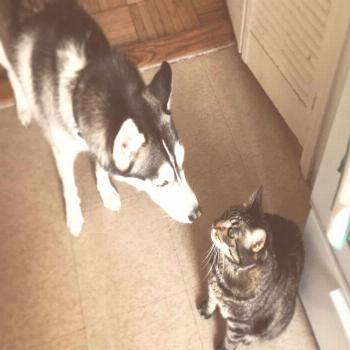 Human sacrifice dogs and cats living together... mass hysteria!  cats  catsofinstagram  cat  of  ca