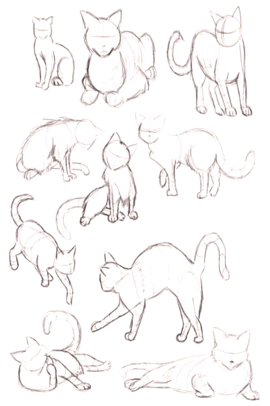 Cat Gestures Drawing Reference Guide | Drawing References and Resources |